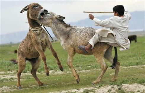 burros_kai_reuters_atireiopaunogato